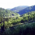 Waldspaziergang1.jpg