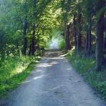 Waldspaziergang2.jpg